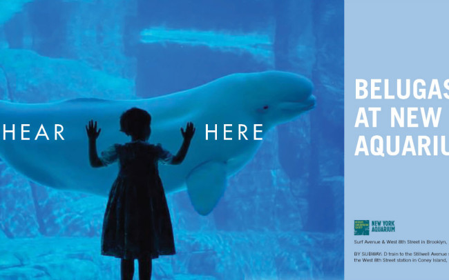 New York Aquarium Subway Poster Series (Beluga: 2 of 3) • Client: Personal Work
